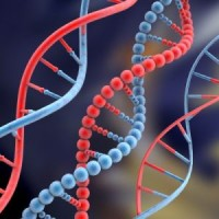 Researchers Create DNA Test for Pirated Movies